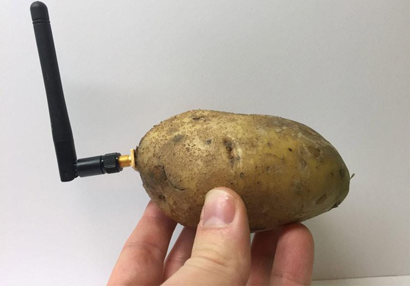 Củ khoai tây thông minh là 'thiết bị' kỳ lạ nhất tại CES 2020