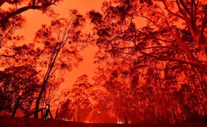 Theo CNBC, bên cạnh những thiệt hại lớn về người và nhà cửa, ước tính có khoảng 480 triệu cá thể động vật thuộc các loài có vú, bò sát và chim đã chết trong đợt cháy rừng ở miền nam Australia.